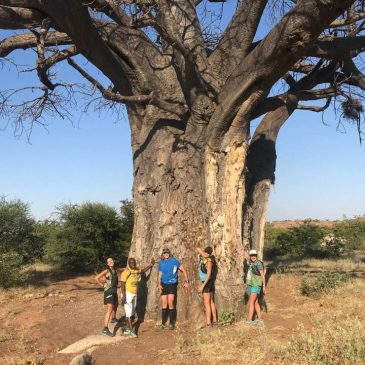 Mapungubwe: Safari on the Run 2018
