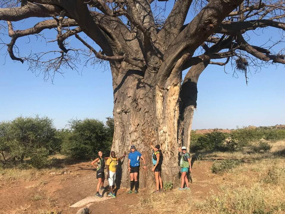 Mapungubwe: Safari on the Run 2018